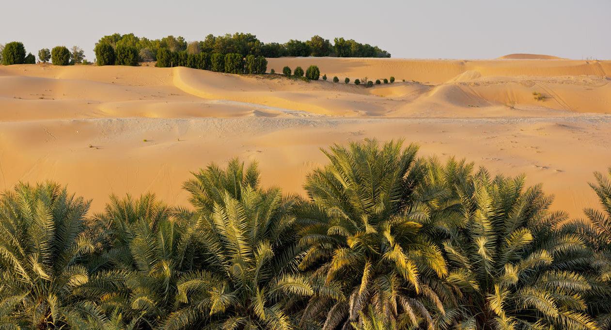 Empty Quarter – Liwa Oasis