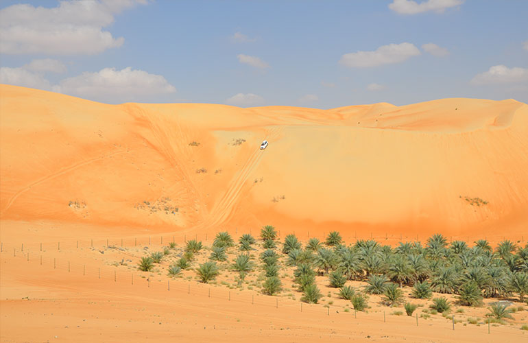 Private Liwa Full Day Safari
